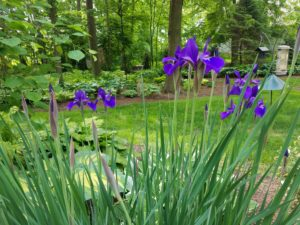 Rader gardening